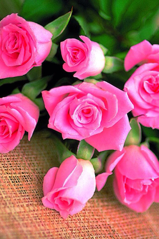 489 best Roses images on Pinterest | Beautiful flowers, 800 ...