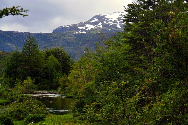 Mallines - Patagonia Chilena