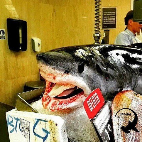 """This photo was taken last week at #CorteInglés in Spain. Both species of mako shark are listed as vulnerable on the IUCN redlist of threatened species. Meat from threatened species of sharks and rays is sold at retailers worldwide. A """"threatened"""" species is a species listed as vulnerable to extinction endangered or critically endangered globally. The populations of these species have dropped so low that they are facing extinction in the near future. Join Nakawe Project in asking grocery…"""
