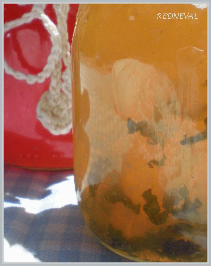 Rosol z bezinkových květů, citronů a máty