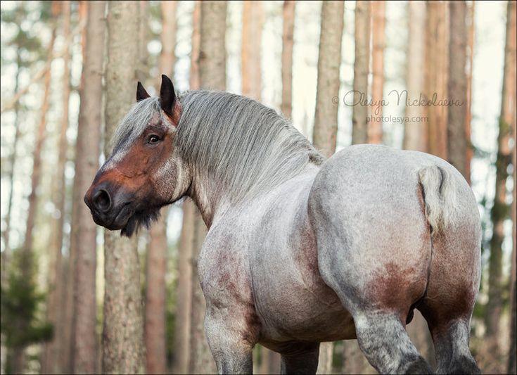 Stallion Flor van 't Costershof