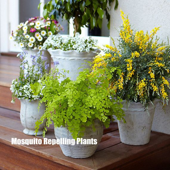 Don't let those pests ruin your Outdoor Entertaining! Check out these 3 mosquito repelling plants, and enjoy the rest of Summer.
