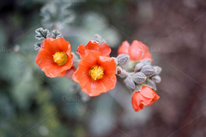 Desert Flowers #2 by Amanda Creek Creative on Creative Market