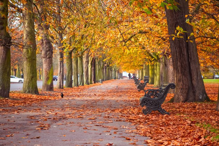 7 Places To See Autumn Leaves In London in 2020