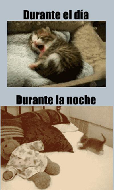 ¡Hoy es miáucoles, el día en que publicamos un lolcat en español. Esta semana vemos al gatito (y por extensión, nosotros) durante el día vs. durante la noche.