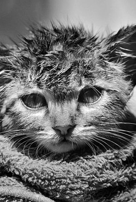 40 Best Wet Cats Images On Pinterest Funny Animals