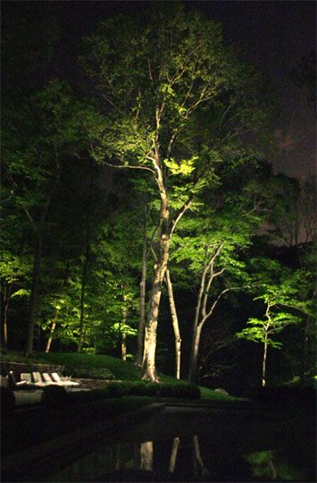 Landscape Lighting Ideas Trees : Best ideas about outdoor tree lighting on