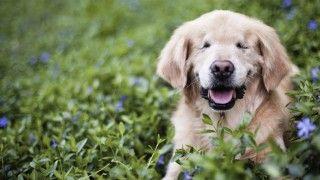 """""""Un perro no busca grandes coches, casas lujosas o ropa de diseñadores. Con agua y comida estará bien. No les importa si eres pobre o rico, listo o tonto, inteligente o estúpido, dale un pedacito de tu corazón y el te dará el suyo""""."""