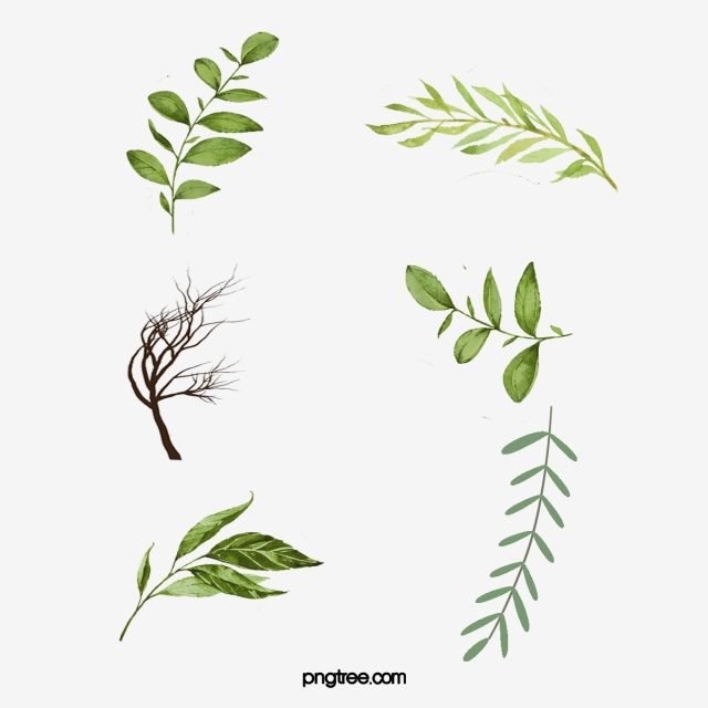 Leaves Green Leaves Watercolor Leaves Leaf Png Transparent