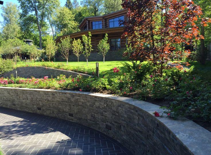 Клён остролистный (Acer platanoides) сорта Royal Red, Вдоль всех подпорных стен высадили можжевельники и розы двух сортов: Palmengarden Frankfurt и «Четыре сезона» (Les Quatre Saisons)