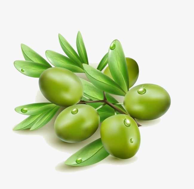 زيتون أخضر أخضر Olive Olive Leaf Green Olives