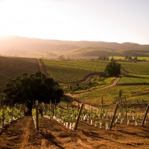 Wine country near Santiago, Chile