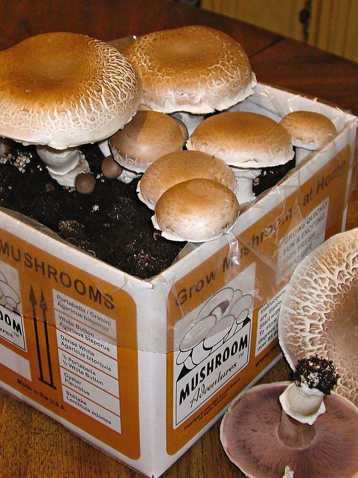 Giant Portabella Mushroom Growing Kit   Gardener's Supply