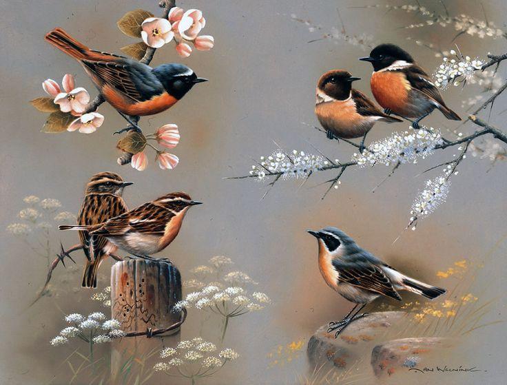 Peinture -Artiste Jan Weenink. Le monde des oiseaux.