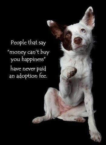 ADOPT SHELTER DOGS.   PRETTY PLEASE