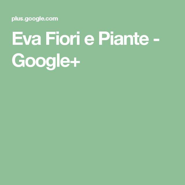 Eva Fiori e Piante - Google+