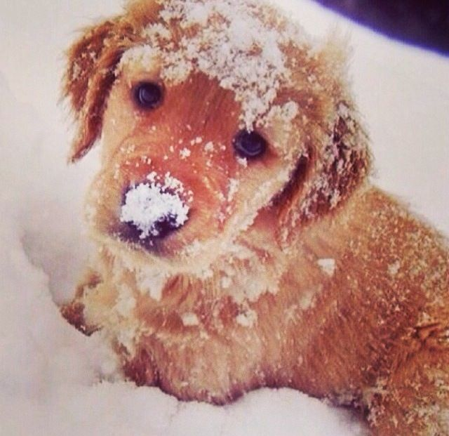 Snow dog  <3