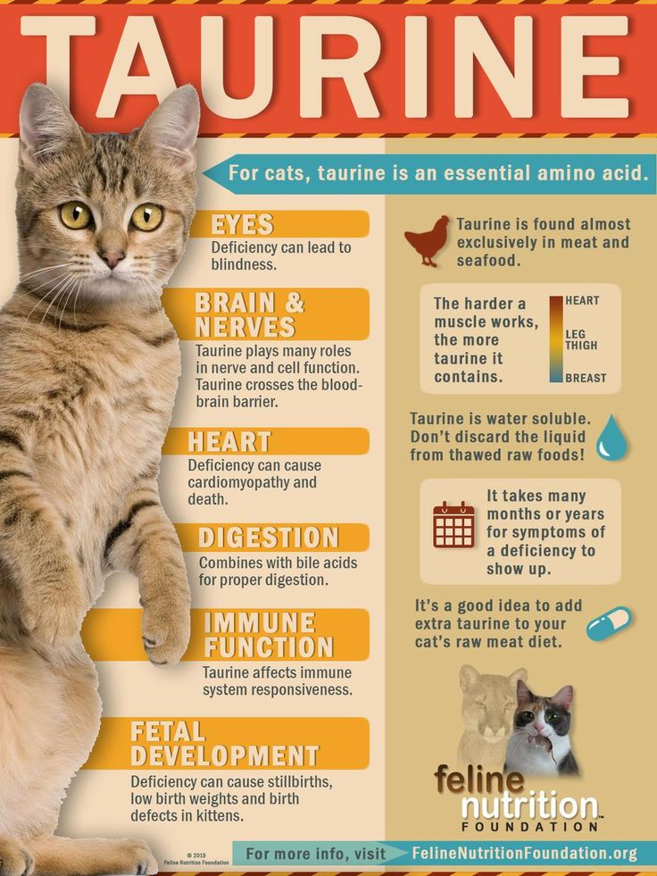 cat health infographic - Google Search