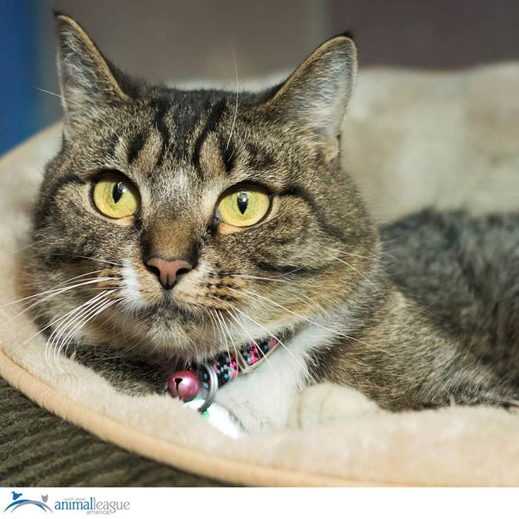 Zazu is a 1year old female tabby. She is shy at first but