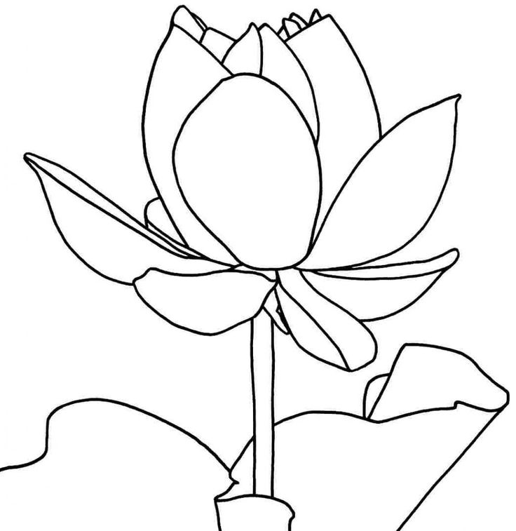 Coloring Pages Of Lotus Flowers