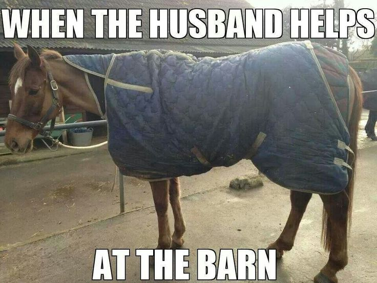 25+ best ideas about Horse Humor on Pinterest | Funny ...