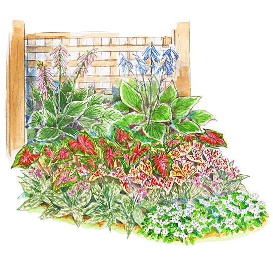 This informal garden bed highlights shade plants with large, colorful leaves, plus a small section of annual impatiens.