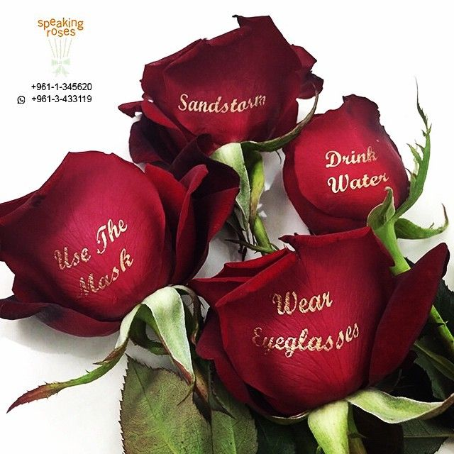 Lovely messages with speaking roses!
