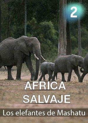 África salvaje: Los elefantes de Mashatu https://www.planetadocumental.com/africa-salvaje-los-elefantes-de-mashatu/