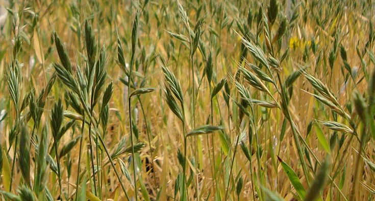 Scientists have identified a genetic switch that helps grasses regulate their carbon dioxide intake.