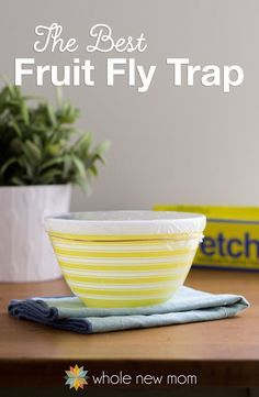 Are Pesky Fruit Flies driving you batty? I tried out a bunch of traps, but this is the Best Fruit Fly Trap that I found! Tons gone in no time!