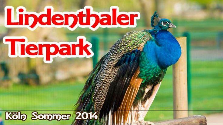 #Lindenthaler #Tierpark #Koeln #Wildlife #Köln #Germany