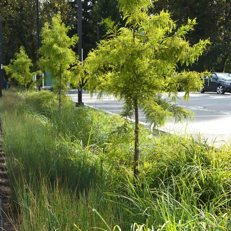 334 best images about swales on pinterest urban parks for Rain garden design
