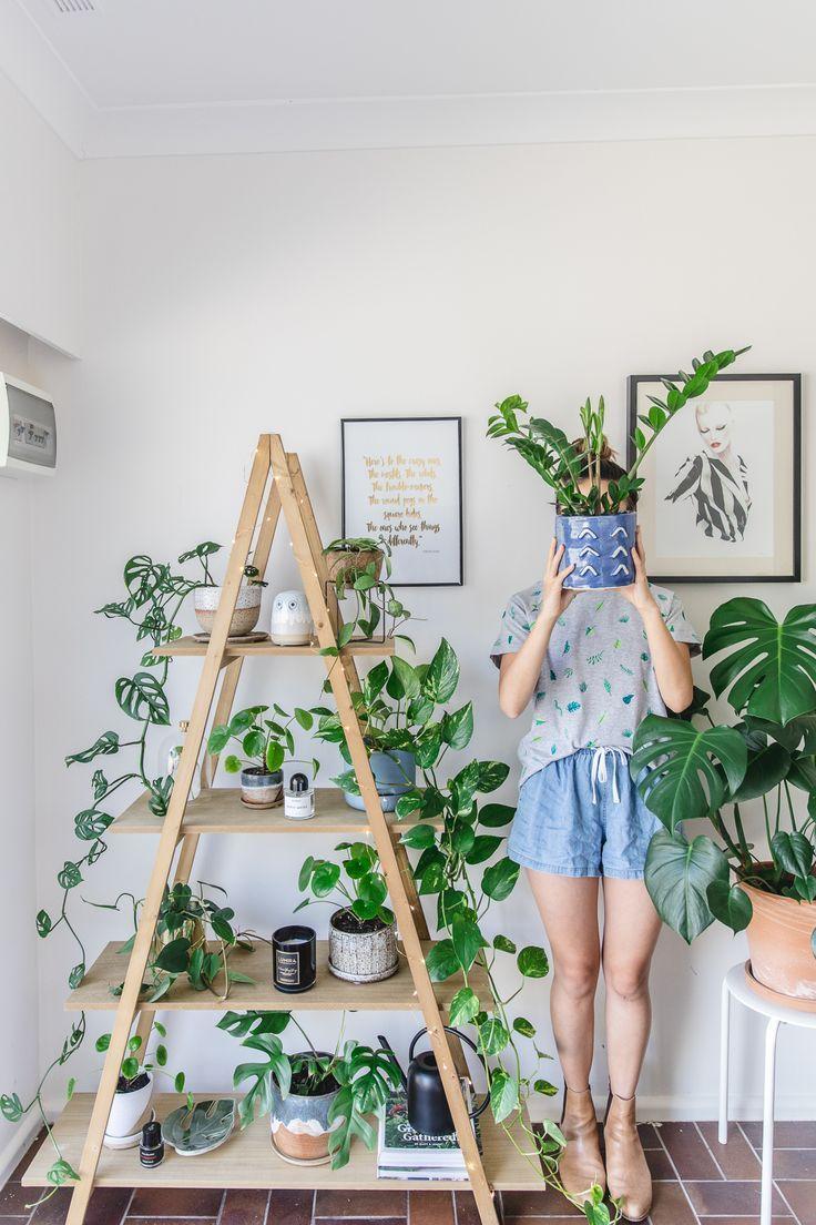 K is for Kani Indoor House plants guide - beginner plants you can't kill (1. ZZ plant / Zanzibar Gem / Zamioculcas zamiifolia, 2. Devil's Ivy / Epipremnum aureum, 3. Swiss cheese plant / Monstera deliciosa, 4. Zebra/prayer plant / Ctenanthe burle-marxii, 5. Heartleaf / Philodendron scandens)