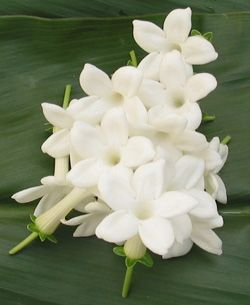 White Stephanotis - I like these for in the bouquets and possibly boutonieres.