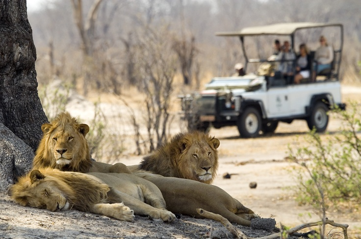Game Drive in Zimbabwe