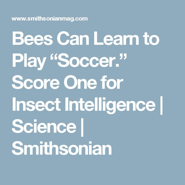 """Bees Can Learn to Play """"Soccer."""" Score One for Insect Intelligence      