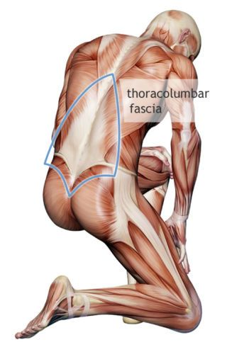 How a Mysterious Body Part Called Fascia Is Challenging Medicine