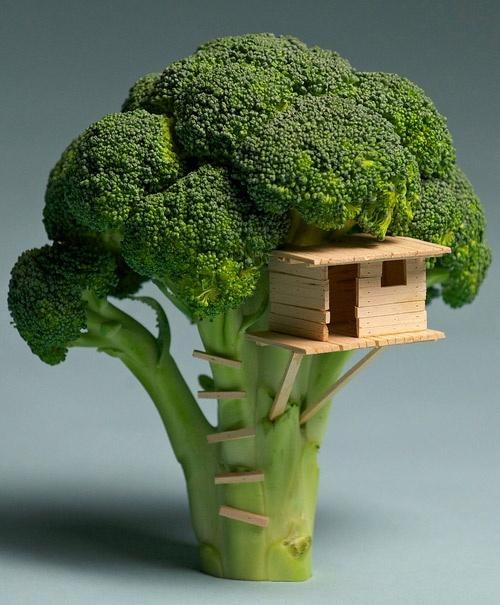 Cabane dans brocolis