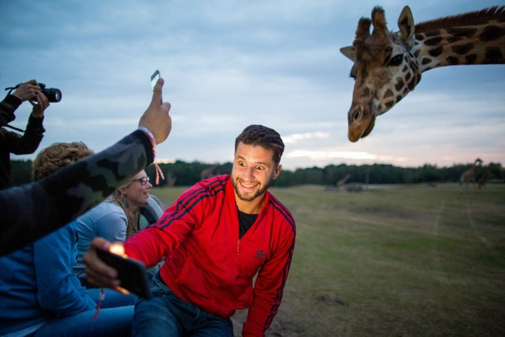 Mohsin, a man who's famous in the Netherlands for his travel journeys around the world, decided to join our BrabantNacht in the Beekse Bergen. It looks like the giraffe recognized him when he asked him to take a selfie..
