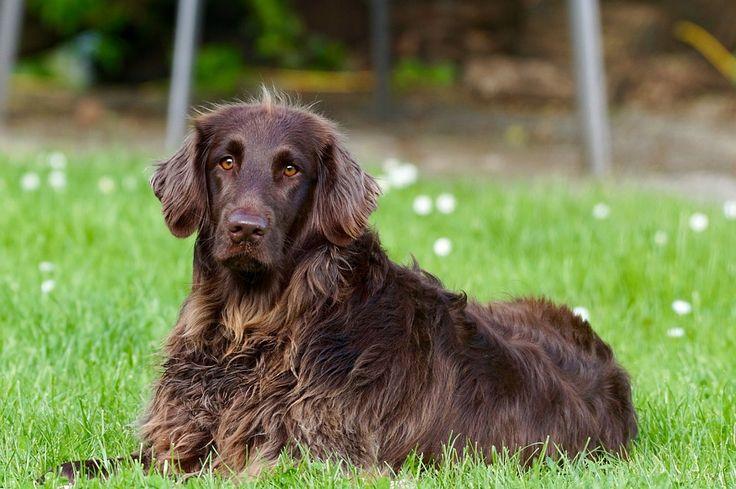 Gratis foto: Hond, Dierlijke, Huisdier - Gratis afbeelding op Pixabay - 782498