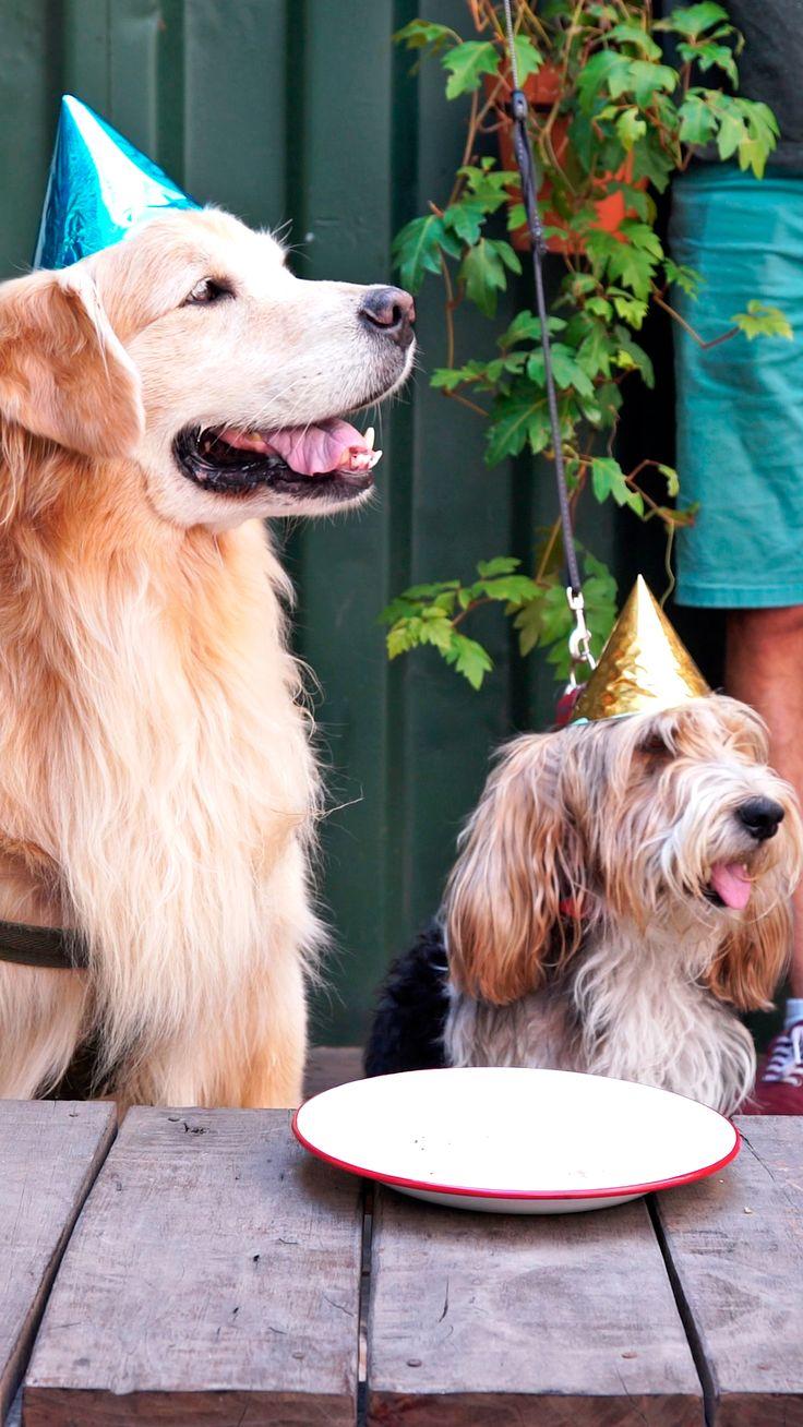 ¡Regálale a tu fiel compañero alguno de estos platos llenos de amor y sabor! Frozen Dog Treats, Diy Dog Treats, Animals And Pets, Cute Animals, Dog Cakes, Dog Snacks, Love Pet, Homemade Dog, Baby Dogs
