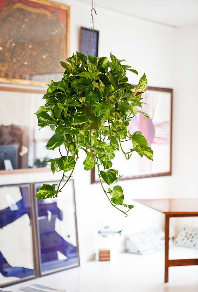 65 Best House Plant Display Images On Pinterest Indoor 400 x 300