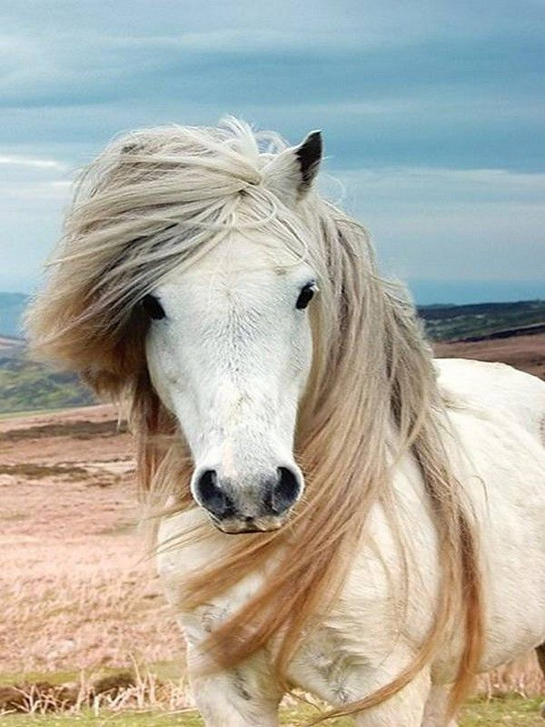 (in) Foto: 20 Fotos de Cavalos Bonitos, de raça e selvagens.