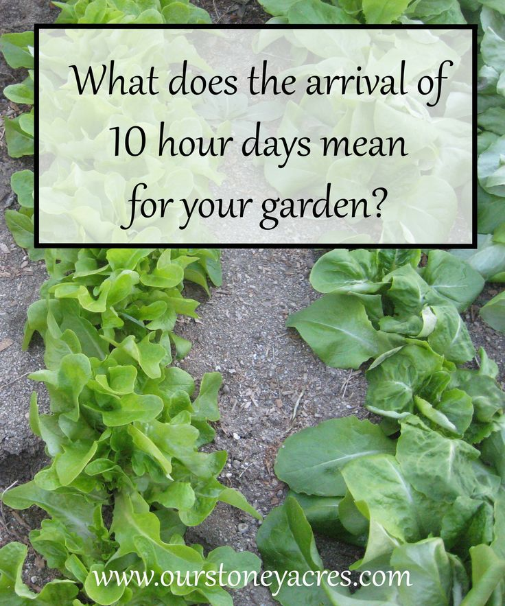 What does the arrival of 10 hour days mean for your garden? In most parts of the country November means 10 hours of day light. How does this effect a garden?