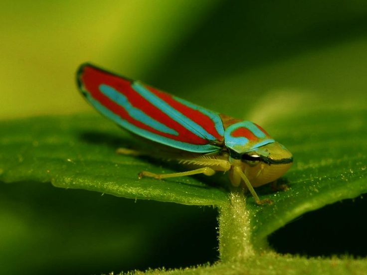 1000+ images about Bugs on Pinterest | Thailand, Jewels ...