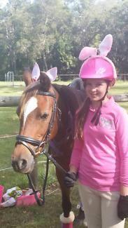 For lease, 13hh Bay Pony | Horses & Ponies | Gumtree Australia Gold Coast City - Bundall | 1136413339