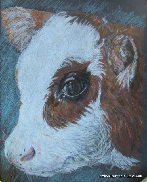 A cute little beef cross calf in colour pencil.