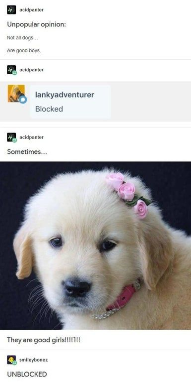 47+ Top Tumblr Posts | Page 21 of 25 | funnynmemes