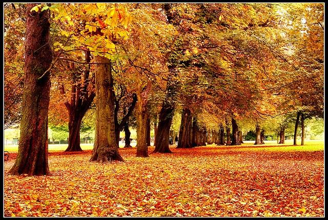 longford park, manchester, uk.