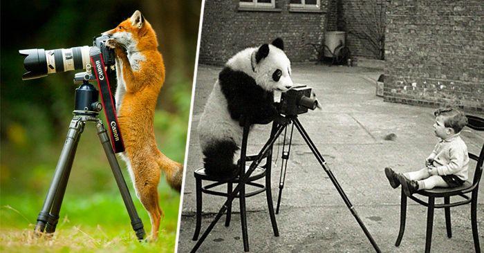 Sin duda hay animales que son demasiado listos y astutos pero los de estas 25 imágenes sin duda alguna quieren ser fotógrafos a como de lugar.